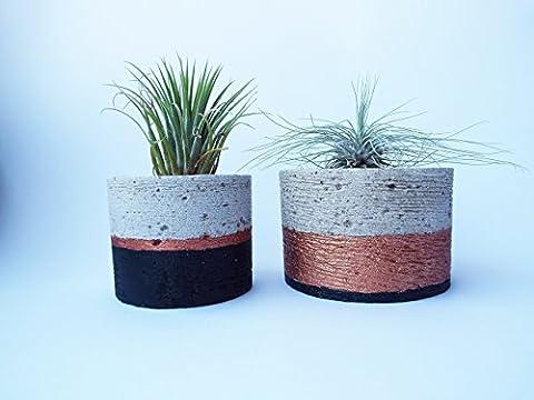 2 Tillandsias Différentes Dans Le Jeu - Pot De Fleur Rond Ø 9 cm et Ø 11 cm En Couleur Noir Et Cuivre Avec Plante Fille de l'Air - Plante Decorative Interieur