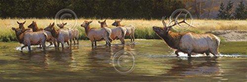 Damen MAN Bonnie Marris Animal Elk Nature Wildlife Poster (wählen Sie Größe, Kunstdruck oder Leinwand), 58.4x27.9 Unstretched Canvas (Inc Gallery Art Man)