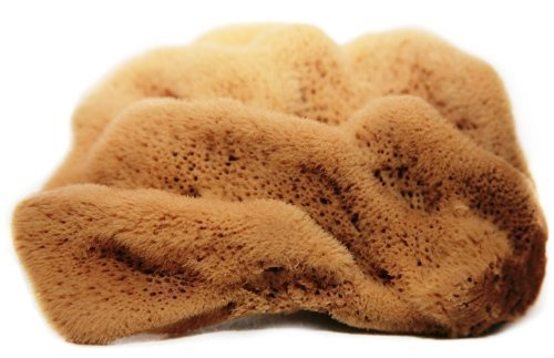 4-45-inches-silk-fina-natural-sea-sponge-for-facial-care-washing-cleaning-showering-baby-bath-art-an