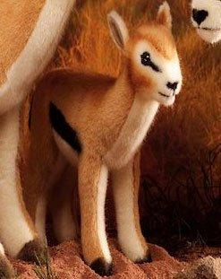 kosener-thomson-gazelle-kind