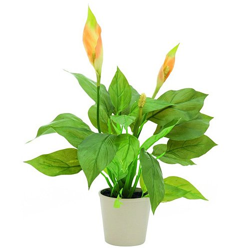 euro-palms-82540345-pianta-ornamentale-spathiphyllum-50-cm-verde-grun