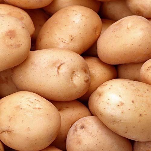 Ultrey Samenshop - 50 Stück Bio Kartoffel Samen Speiskartoffel Gemüsesamen schmackhaft Pflanzkartoffel Saatgut ertragreich winterhart für Garten Balkon/Terrasse