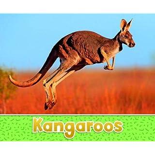 Kangaroos (Pebble Plus: Australian Animals)