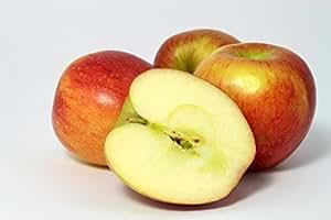 Braeburn Apfel Apfelbaum Herbstapfel Obstbaum 100/150 cm