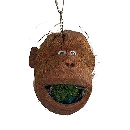 Java–Coco Coco Monkey Mono–Kopf für Hacken für große Ara und Papageien