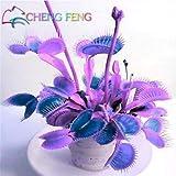 Go Garden Hot Solde. Lot de 100 Plantes de bonsaï Insectivores en Pot Bleu Dionaea Muscipula Carnivore Plantes géantes Clip Venus Flytrap Plante : Transparent
