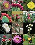 Florida Kaktus-Mischung, exotische und seltene Kakteen Blühende Wüste Sukkulente Samen - 50 Samen