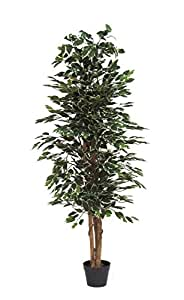 Ficus Benjamin Variegato - Albero Artificiale Da Arredo Interno Con Tronco Vero - Alto 150 cm Largo 55 cm