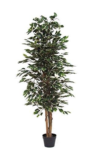 ficus-abigarrado-arbol-artificial-de-los-muebles-con-el-tronco-natural-altas-150-cm-largo-55-cm