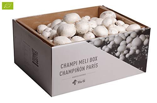 Este es uno de nuestros fantásticos Kits de Autocultivo para la producción de champiñones París, puedes cultivar entre 2,5 - 3,5 Kg kilogramos. Desde su hogar, su trastero, o en cualquier lugar, ya que una vez humedecido el producto crecerán sin prob...