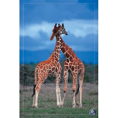 24x36-high-love-save-our-planet-giraffes-art-poster-print-by-poster-revolution