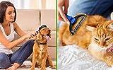 BELISY Hundebürsten/Katzenbürsten - 2er Set - perfekte Fellpflege für Hund & Katze - 2