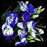 200pcs / pack viola semi Lisianthus rari Semi eustoma bonsai del fiore Semi per la casa e il giardino