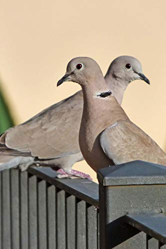 Eurasian Collared Dove (Streptopelia Decaocto) Journal: 150 page lined notebook/diary -