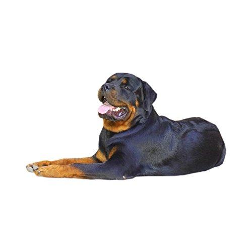 Rottweiler-Hundehalsband, XXL, gute Qualität, langlebig