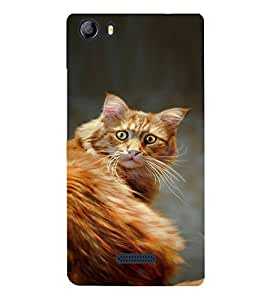 EPICCASE Narnia Cat Case Mobile Back Case Cover For Micromax Canvas 5 E481 (Designer Case)