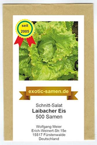 Eisbergsalat - Laibacher Eis - 500 Samen
