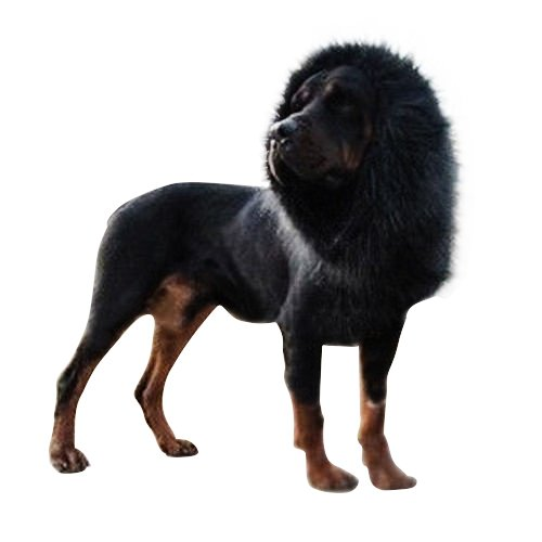Pet Dog Lion Wigs Mane Dog Costumes Dog Hair Party For Dogs With Ears Festival Fancy Dress up Lion Mane Wig Halloween Costume Medium/Large Dogs (Schwarze Löwenmähne Kostüm)