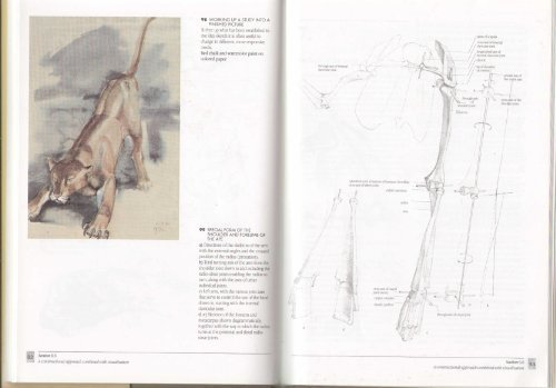 artists-guide-to-animal-anatomy-an-illustrated