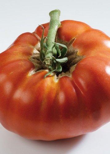 Tropica - Tomaten - Russe Rouge (Lycopersicon esculentum) - 10 Samen