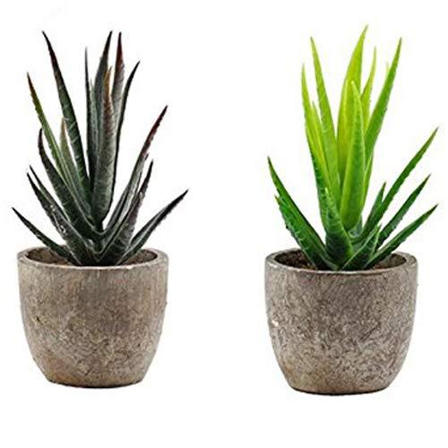 GreenEur Plantas de artificiales suculentas - Pack de 2