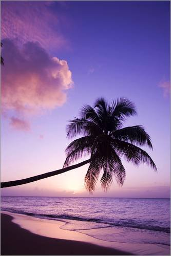 Posterlounge Alu Dibond 100 x 150 cm: Lone Palm Tree at Sunset - Coconut Grove Beach at Cade's Bay...