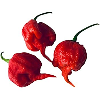 Weltrekord-Chili Moruga red /& Kirsch-Chilli Cherry Bombe Saatgut // Sortiment