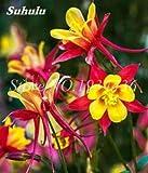 AGROBITS Importato Columbine per piante Aquilegia vulgaris Rare pianta i bonsai Fiore per la casa giardino di fiori in vaso 100 Pz: 19