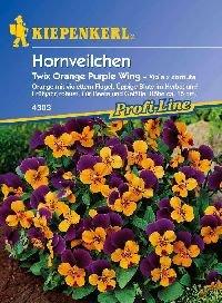 saatgut-hornveilchen-twix-orange-purple-wing