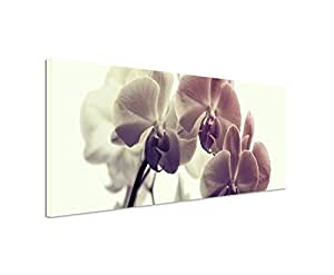 120x40cm panoramabild auf leinwand blume orchidee makro bild. Black Bedroom Furniture Sets. Home Design Ideas