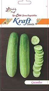 Cucumber F1 Hybrid Seeds by Kraft Seeds