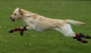 Paws Pro-Active entièrement étanche Bottes de chiens Garanti pour garder pansements, bandages, plâtres et attelles sec