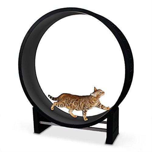 *CanadianCat Company ® | Katzenlaufrad | Cat in Motion | Anthrazit – Trainingsgerät und Spielzeug für Katzen*