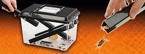 Exoterra Boîte à Nourriture Vivante Grand Modèle avec 2 Gamelles et 4 Tubes 30x20x19 cm pour Reptiles et Amphibiens