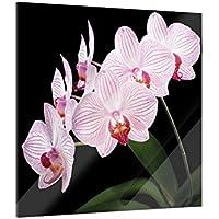 Klebefieber Glasbild Schneewei/ße Orchidee B x H 40cm x 60cm