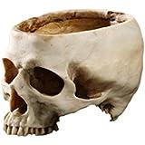 Florero Maceta Jarrón Diseño Cabeza de Cráneo Flores Planta Decoración Hogar