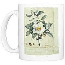 Photo Mug of Franklinia alatamaha, franklinia by Prints Prints Prints