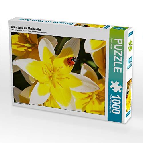 CALVENDO Puzzle Tulipa tarda mit Marienkäfer 1000 Teile Lege-Größe 48 x 64 cm Foto-Puzzle Bild von Gisela Kruse