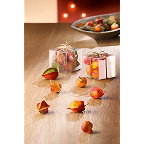 Deko Flores plástico Flores Physalis Flores en caja de PVC herbstfarbene Frutas lisa y textil 7–12Unidades Gilde