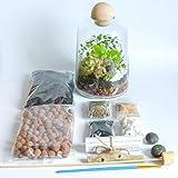 Concretelab&co Terrarien-Set, handgefertigt, durchsichtiges Glas, runde Holzplatte, DIY Mini Garten mit Fittonia Moos, 19 cm Höhe