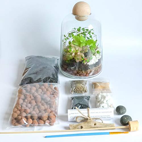 rien-Set, handgefertigt, durchsichtiges Glas, runde Holzplatte, DIY Mini Garten mit Fittonia Moos, 19 cm Höhe ()