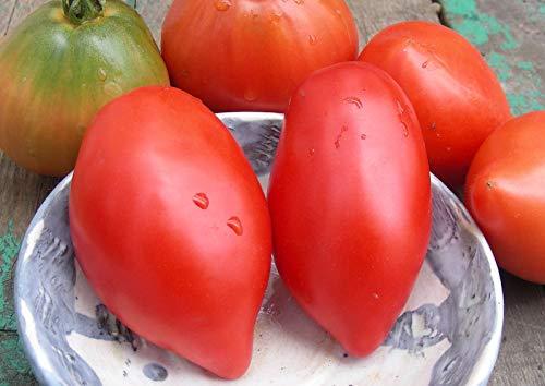 Portal Cool Perestroika Plum Tomato Seeds