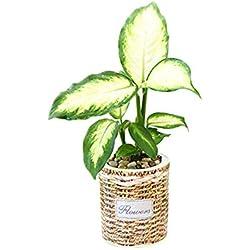 Selbstbewässernder Pflanzer, moderner dekorativer Pflanzentopf für im Freien oder Innengarten. Elegantes Kunststoff-Korbgeflecht-Rattan-Look-Design, geeignet für Pflanzen & Blumen.11cm