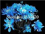 AGROBITS 100 piezas del crisantemo planta de Bonsai Bonsai flor del aster Flor Seedsplants crisantemo del arco iris perenne de flores a domicilio jardín: 13
