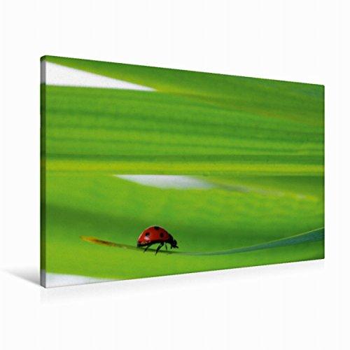 Calvendo Premium Textil-Leinwand 90 cm x 60 cm quer Glücksbringer | Wandbild, Bild auf Keilrahmen, Fertigbild auf echter Leinwand, Leinwanddruck Gesundheit Gesundheit