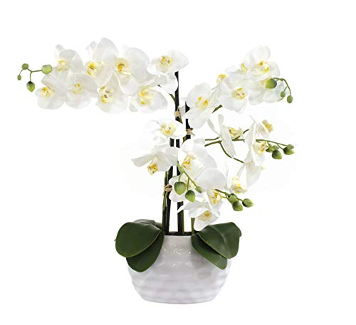 Decoline Kunstpflanze Orchidee XL mit Keramiktopf - ca. 53cm hoch (Blüten weiß - Topf weiß)