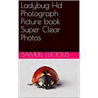 Ladybug Hd Photograph Picture book Super Clear Photos