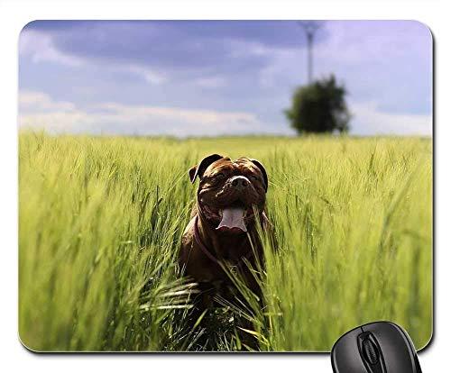 Gaming-Mauspads, Mäusematte, Bordeaux Mastiff Dog Animal White De Mastiffs 6