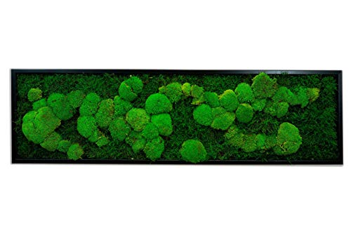 Moosbild Wandbild mit Moos Kugelmoos Moosplatte Pflanzenbilder Moosbilder versch. Maße günstig (140x40 cm, schwarz)