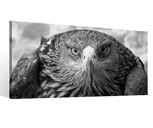 Leinwandbild 1 Tlg Adler Auge Steinadler Vogel Schwarz weiß Leinwand Bild Bilder Druck Holz gerahmt 9V565, 1 Tlg BxH:80x40cm (Adler Bilder)